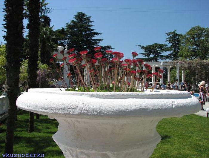 Вход в Никитский ботанический сад и покупка билета