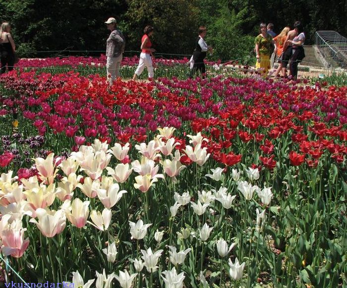 Прогулка по Никитскому ботаническому саду