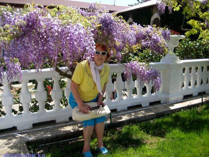 Цветет глициния