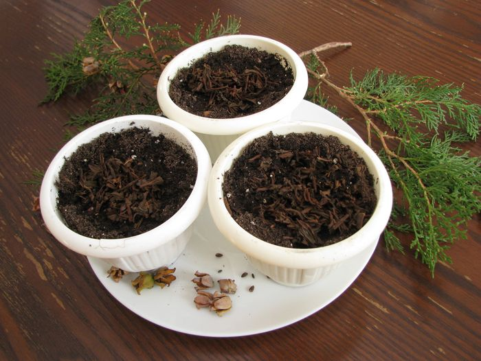 how-to-grow-a-fifth-seed